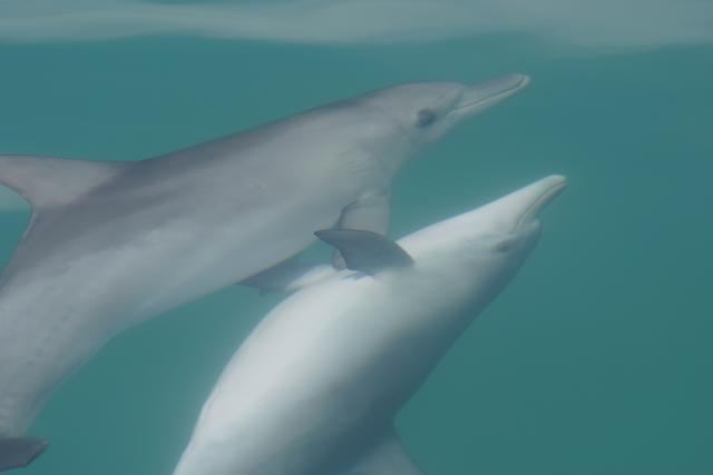 Dolphins petting